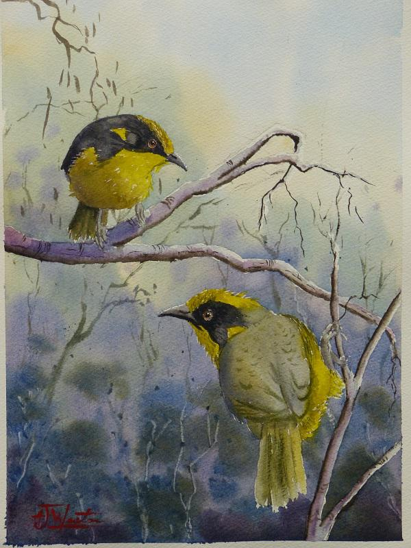 © Tony Weston - Just hanging on, Helmeted Honeyeaters (Highly Commended for Wildlife/Botanical 2016)