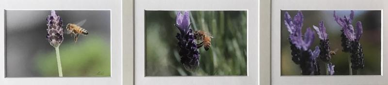 © Bozena Gorecki - Lavender and a Bee