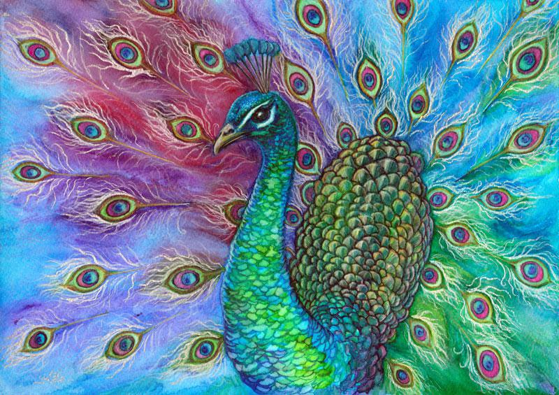 © Kate McCredie - Peacock