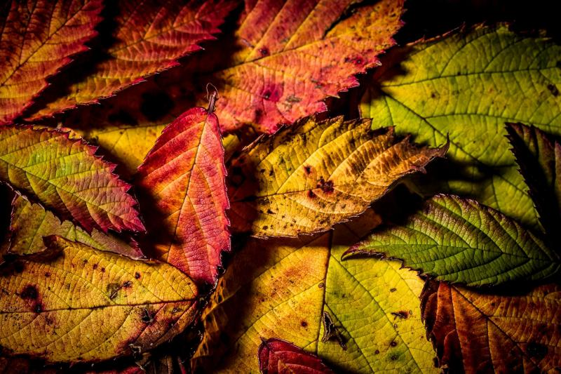 © Murray Thompson - Autumns mosaic