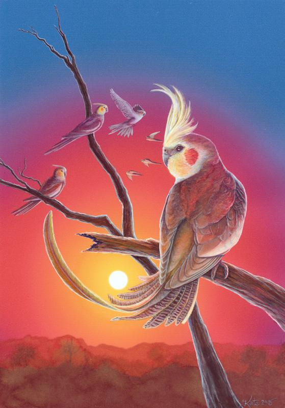 © Kate McCredie - Outback Cockatiels