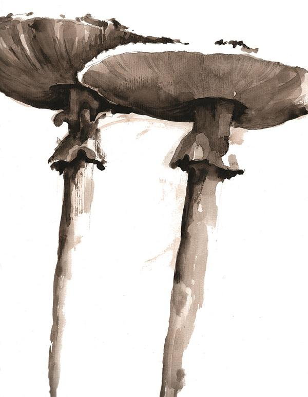 © Janine Trail - Two tall mushrooms